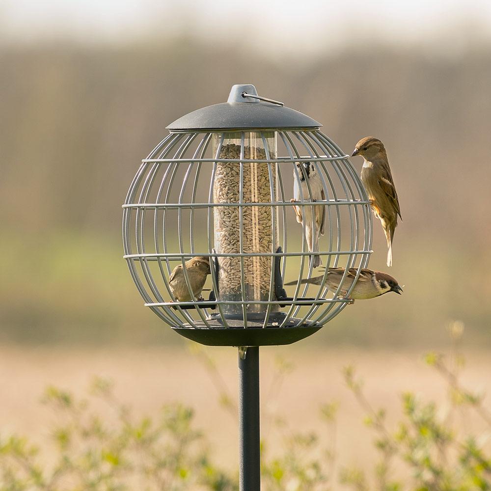 Beschermsilo voor kleine vogels Athena