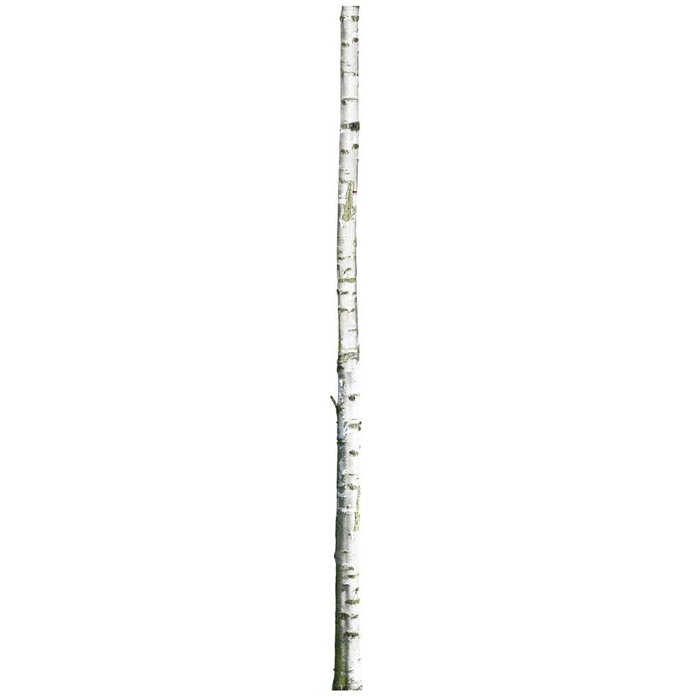KEK muursticker berkenboom 2