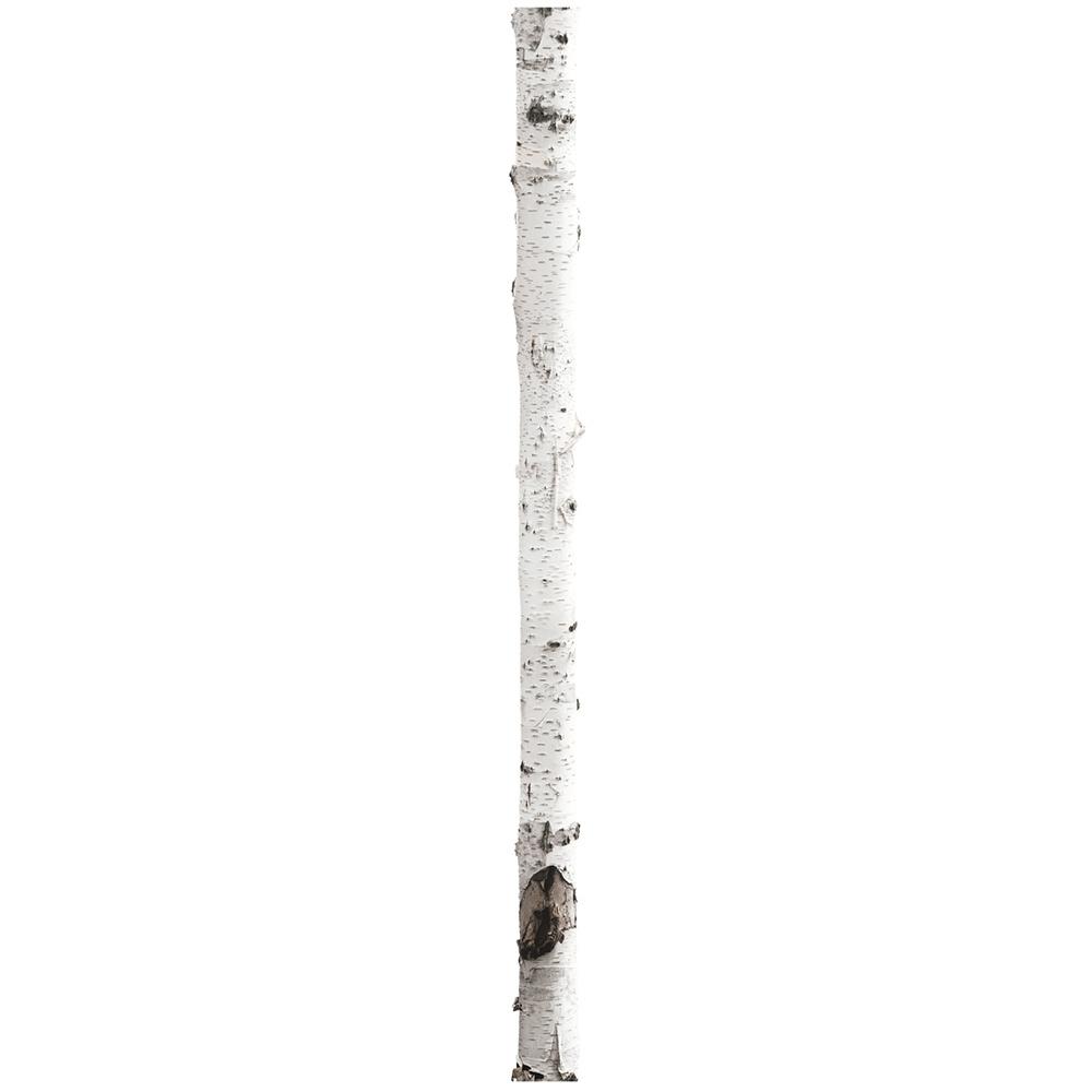 KEK muursticker berkenboom 3