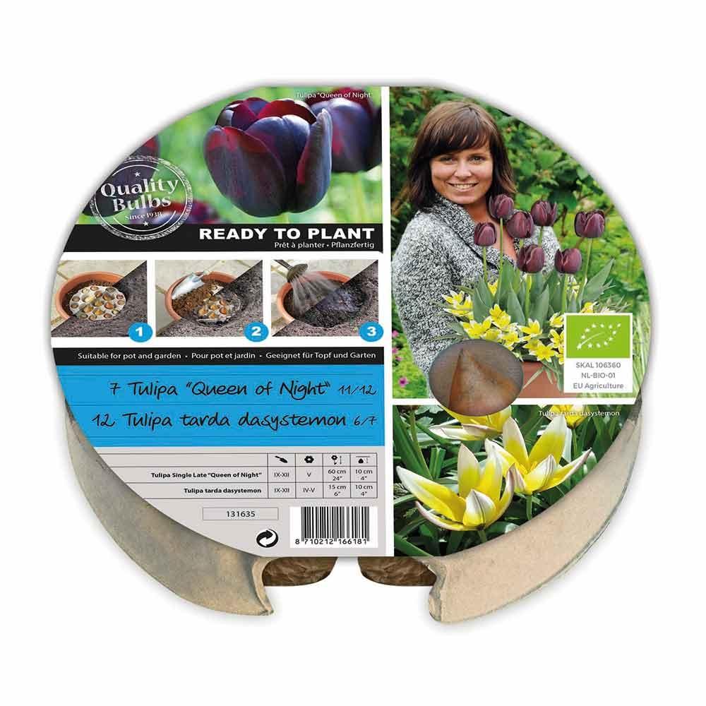 Plant-o-mat bloembak - Tulp
