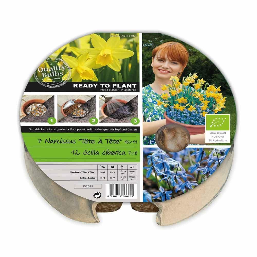 Plant-o-mat bloembak - Narcis