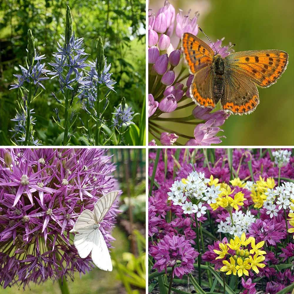 Bloembollenset voor vlinders