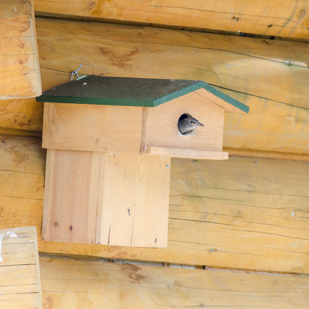 Nestkast Spreeuw met balkon 45 mm