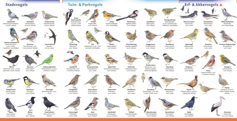 Minigids Vogels van Nederland en Belgi�
