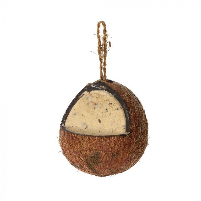 Hele kokosnoot meelwormen-insecten