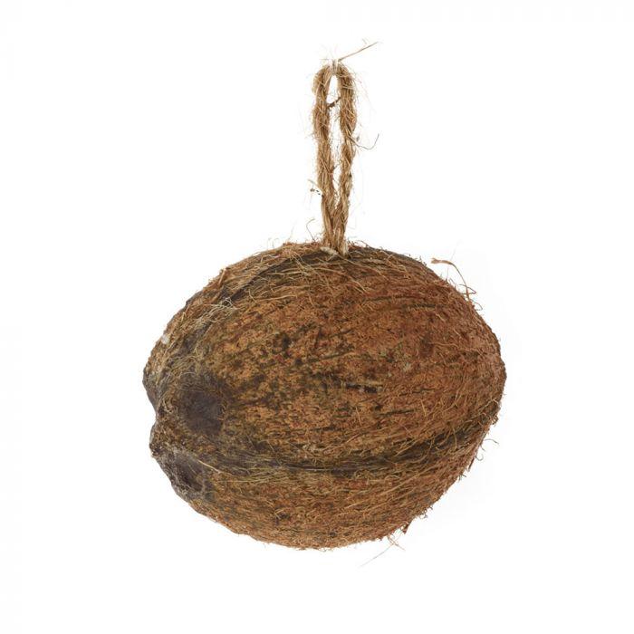 Halve kokosnoot meelwormen - insecten