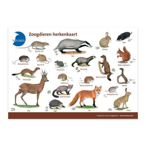 Kijkkaart Zoogdieren