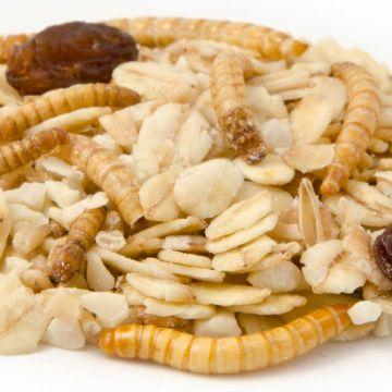Premium vetvoer met meelwormen 10 kg