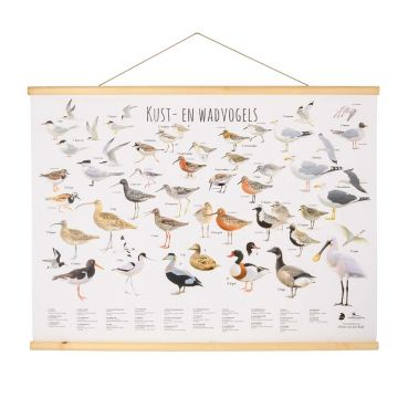 Kust- en waddenvogel poster Elwin van der Kolk