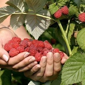 Fruit, groenten en kruiden