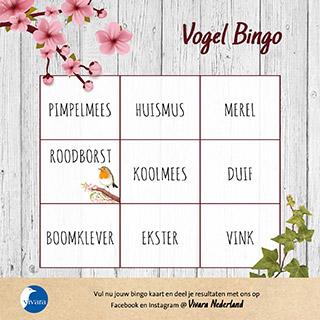 Vogel Bingo
