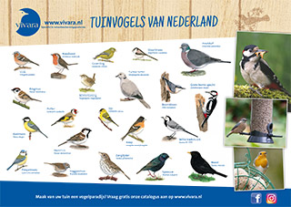 Tuinvogels Poster