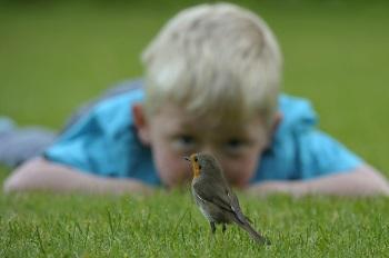 gevonden vogeltjes