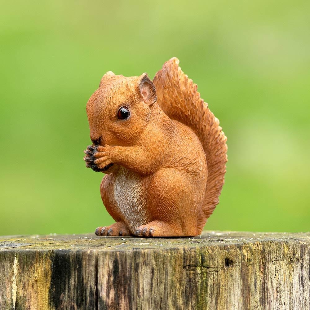 Etende baby eekhoorn