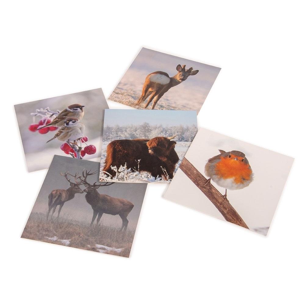 Natuurmonumenten Kaartenset Dieren in de winter van Michelle Dujardin