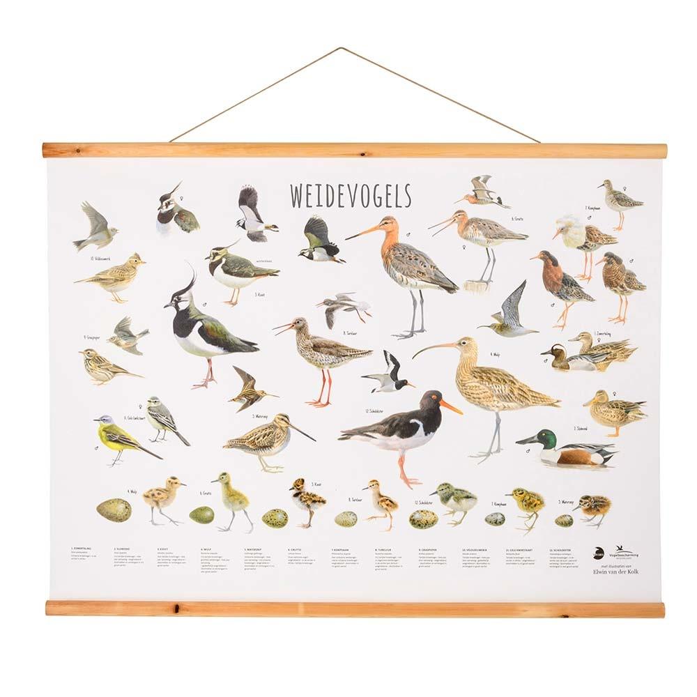 Weidevogels poster Elwin van der Kolk