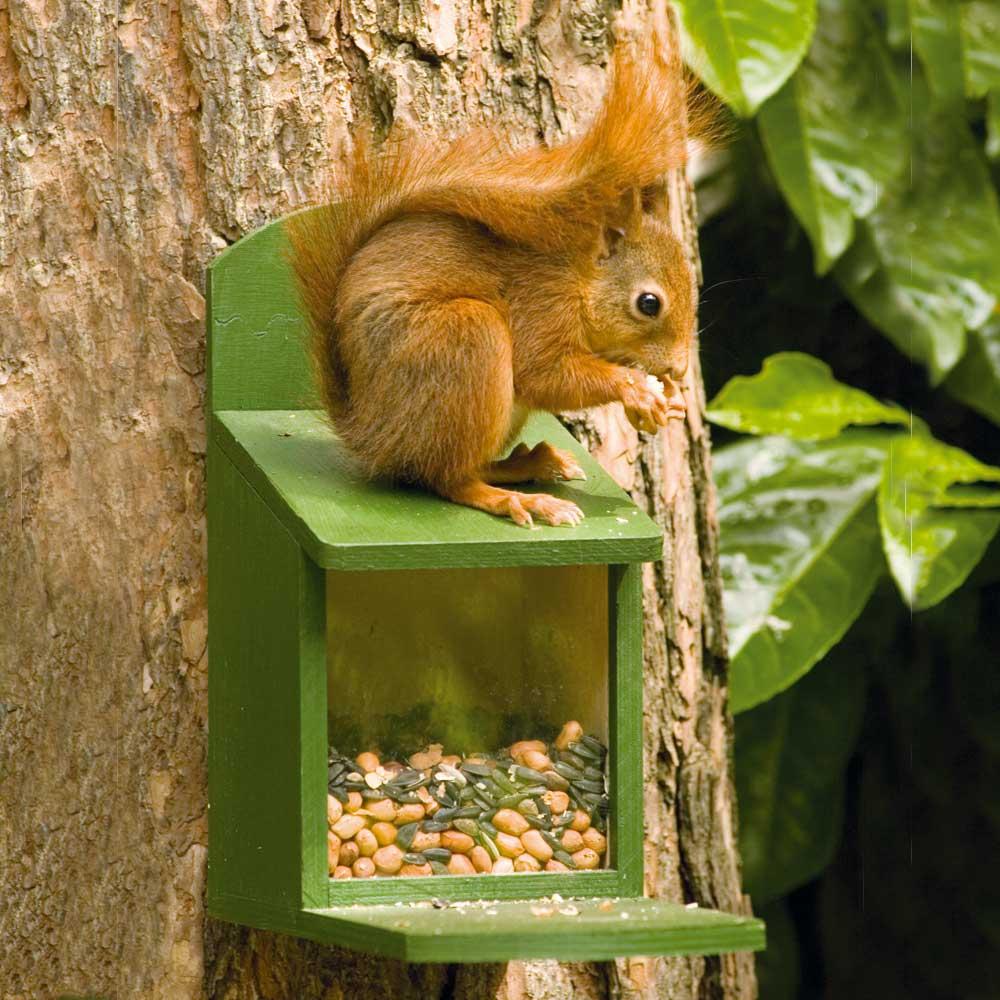 Eekhoornpakket: eekhoornvoederhuis met 1 kg voer