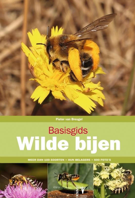 Basisgids Wilde Bijen