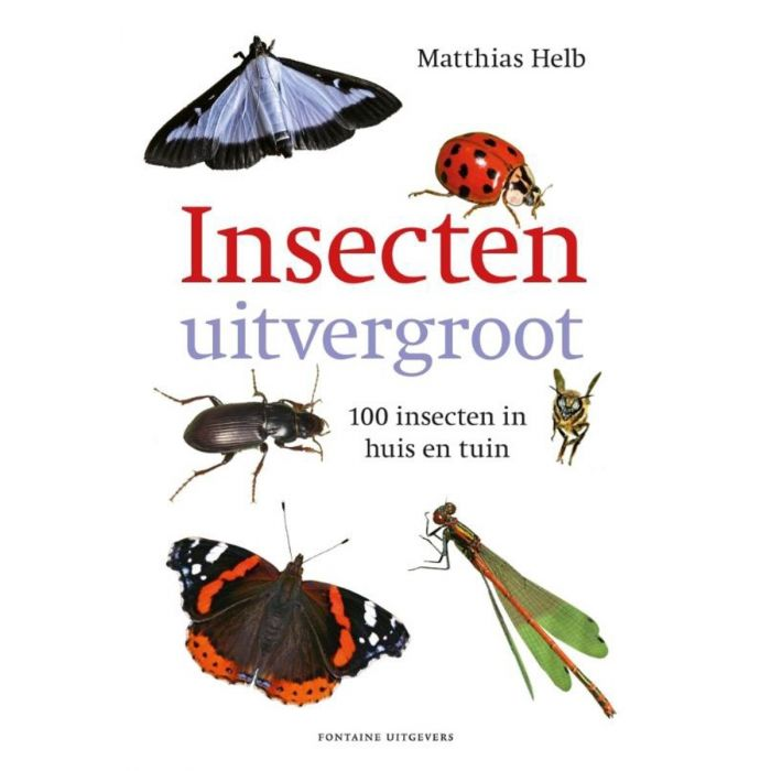 Insecten uitvergroot