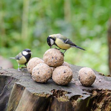 Vetbollen met insecten - 6 stuks