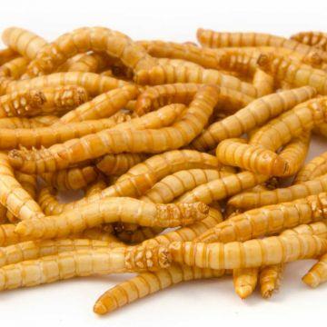 Gevriesdroogde meelwormen 100 g