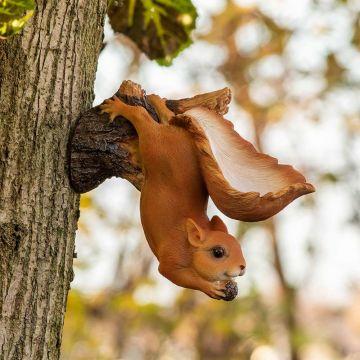 Hangende eekhoorn