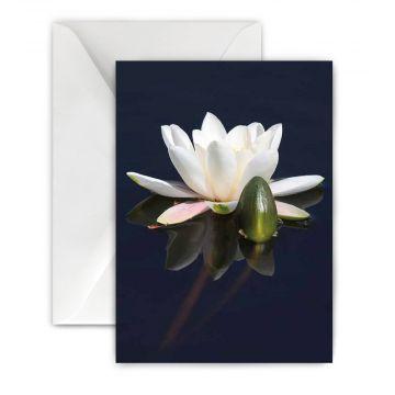 Natuurmonumenten wenskaart Witte waterlelie