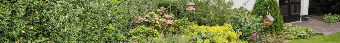 plants for garden wildlife