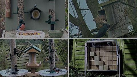 Vogelvriendelijke tuin webcam
